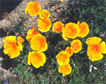 blossomtrail2_sm